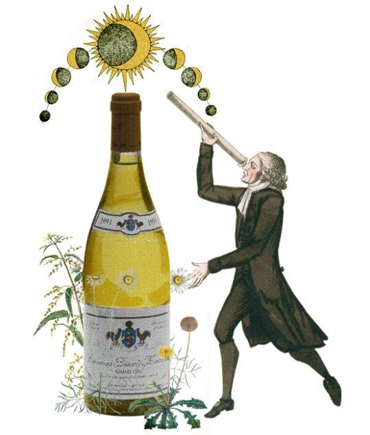 Domaine Leflaive, Baghera/wines